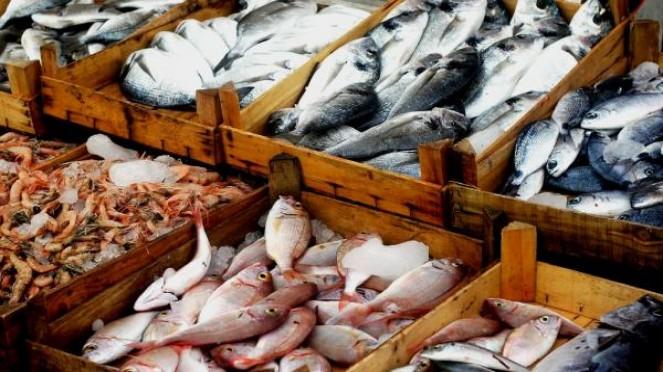 مصر: تصدير الأسماك والمأكولات البحرية 5c5e8c9c2b90c.jpeg